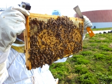 Tray from bee hives